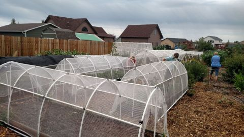Beds with tall netting keep Kevin Mutschler's plants from sustaining devastating hail damage.